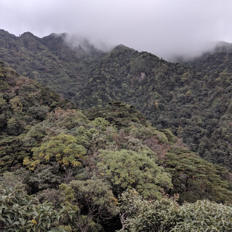 Trees from subtropical Vietnam (2019)