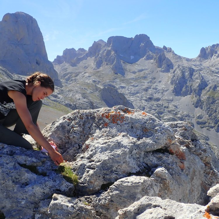 Plants from the Pyrenees and Cantabrian mountains (2018 & 2020)