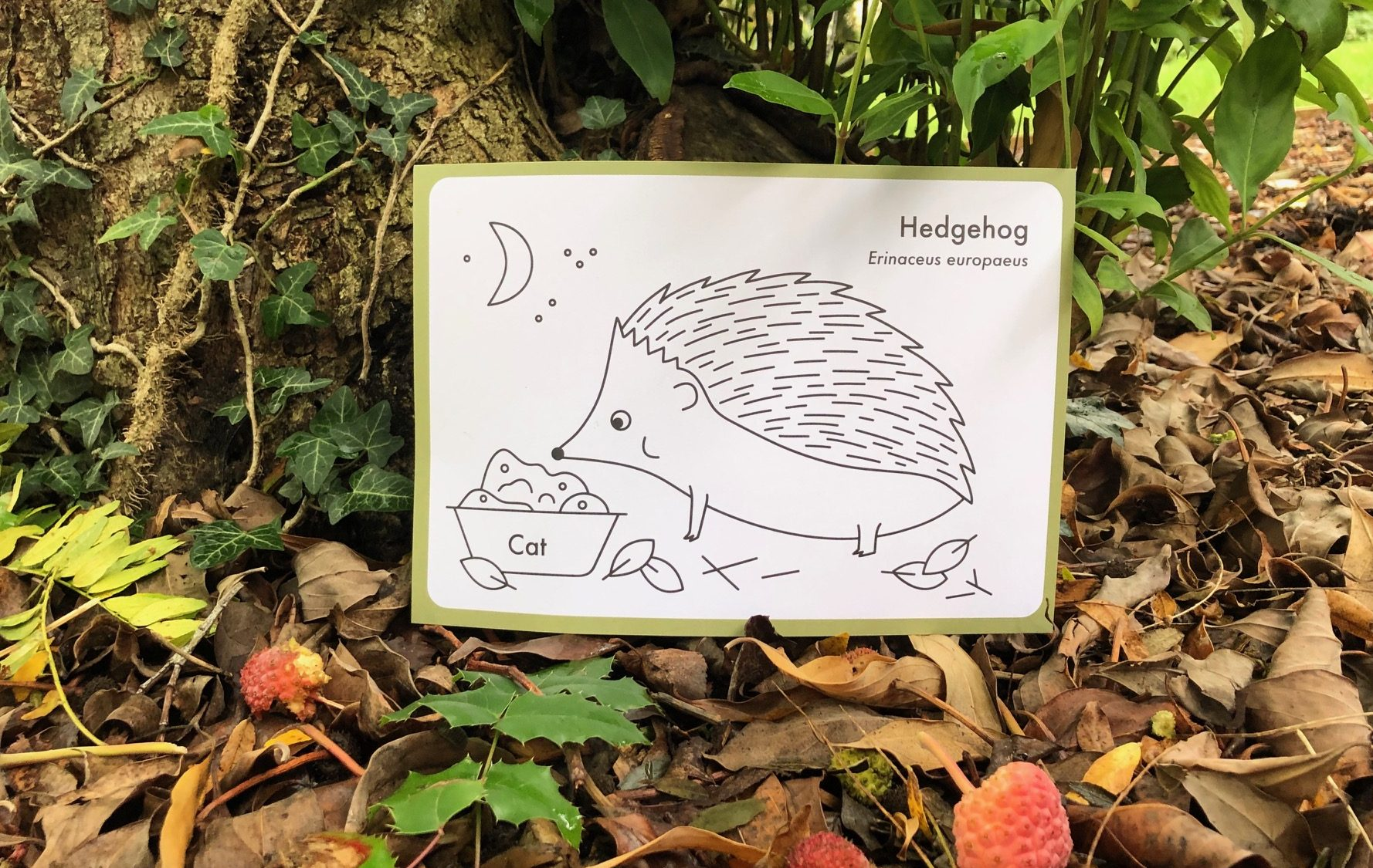 Image of drawing of hedgehog at the base of a tree