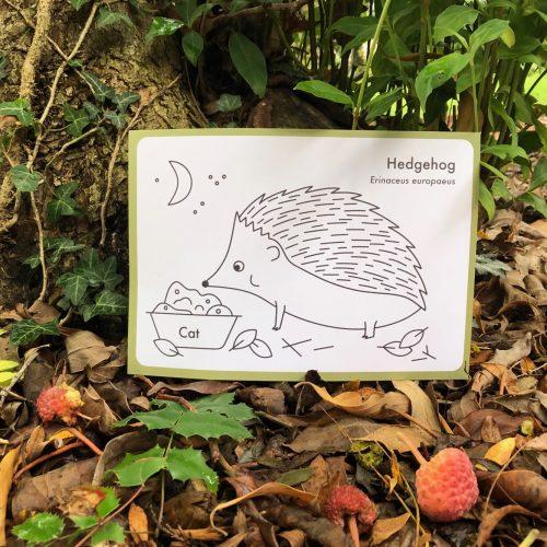 Autumn Animals Family Trail