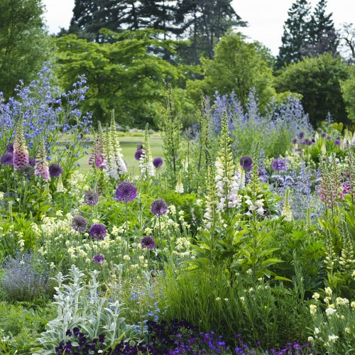 ONLINE COURSE: Introduction to planting and maintenance of ornamental beds
