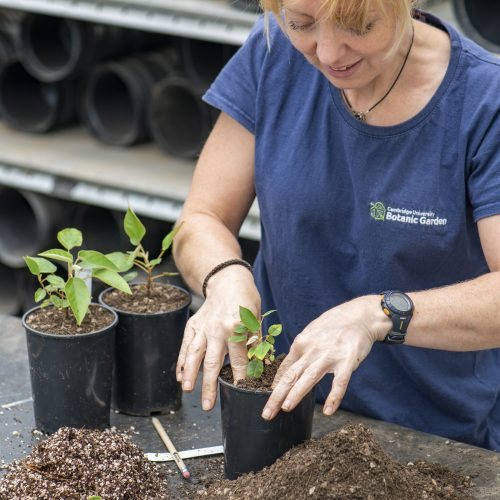 ONLINE COURSE Introduction to propagation: seed sowing, cuttings, division and layering