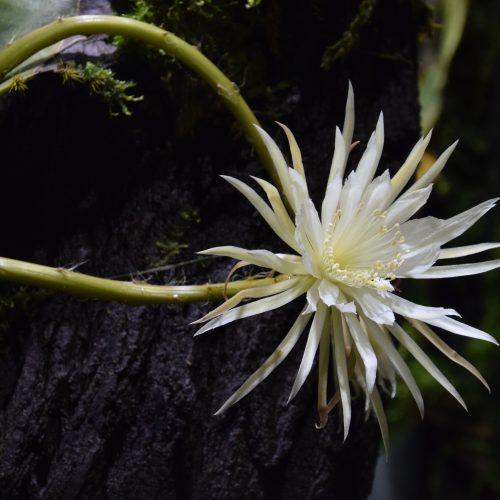 Secrets of the Moonflower
